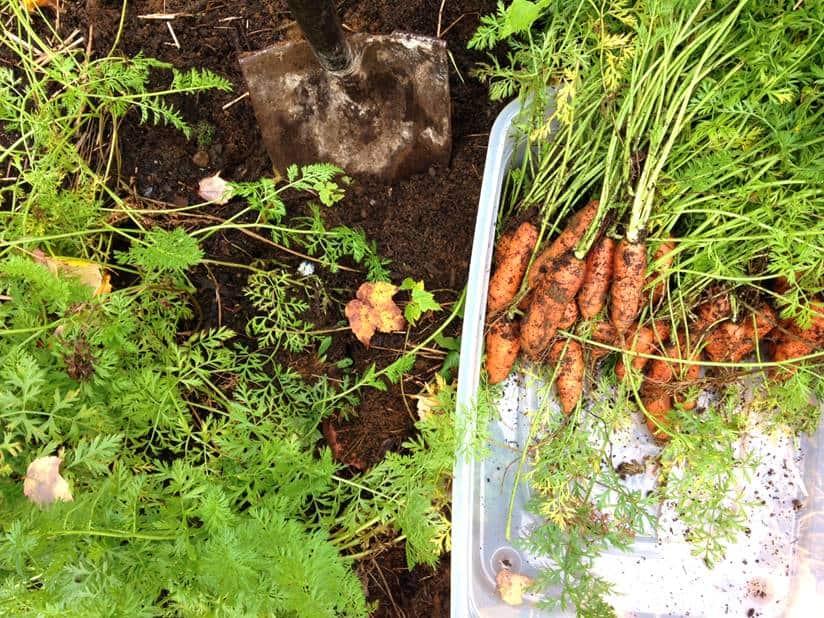 jardin-potager-de-la-confession-du-gourmet-36