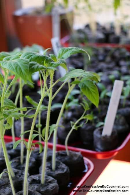 Seedling 1 450_675