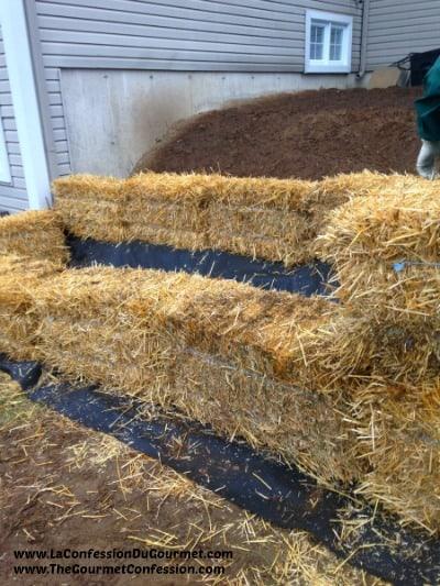 Straw bale gardening 400_600