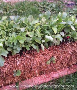 rz4-lettuce-straw-bale-garden-2