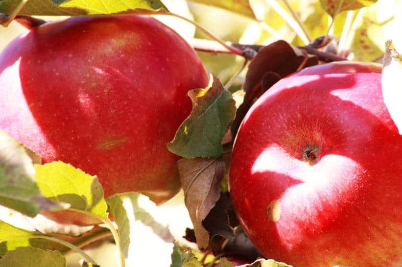 dessert-aux-pommes