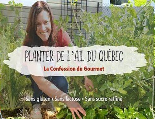 Planter de l'Ail du Québec