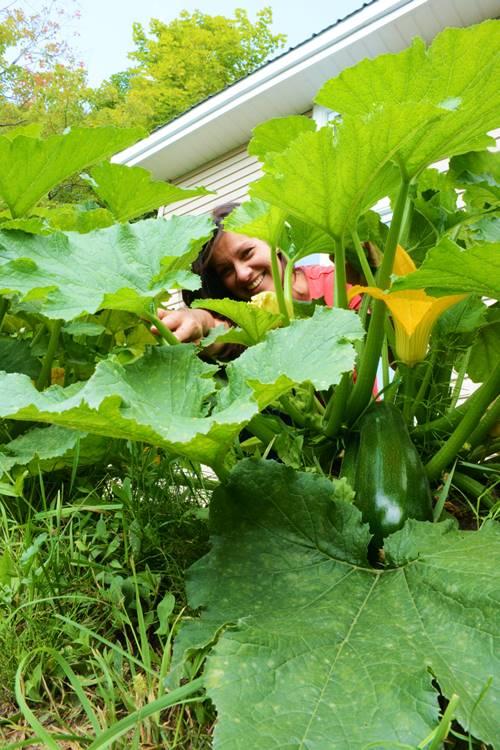 Johanne Gilbert dans son potager bio avec un plant de zucchini pour faire sa recette de lasagne épinard ricotta sans pâtes.