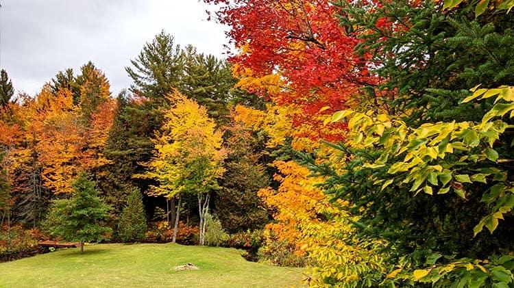 Érables aux vives couleurs d'automne qui ont inspirés la recette de smoothie aux épices à citrouille