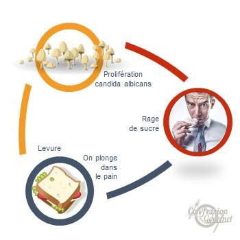 Visuel du cercle vicieux : pain - prolifération de candida albicans - rage de sucre