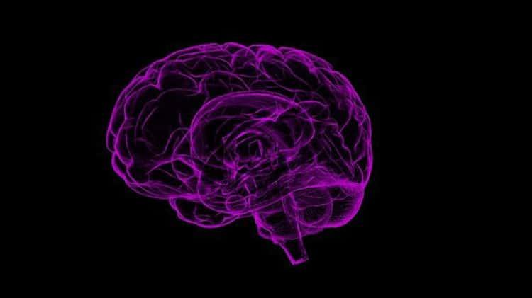 Cerveau mauve semi transparent dessiné à l'ordinateur sur fond noir